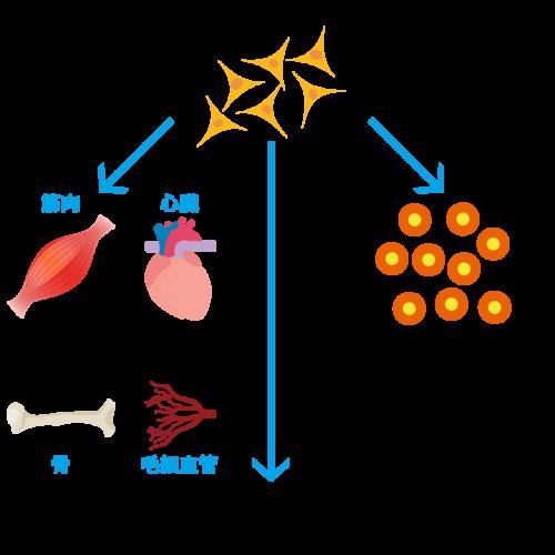 stem_cells001
